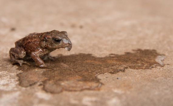 A Rather Wet Froglet by samuelelliswilson
