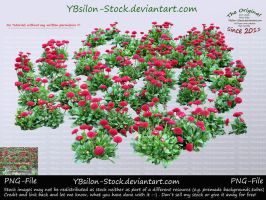 Red Flowers by YBsilon-Stock by YBsilon-Stock