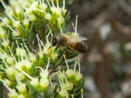 Bee 013 - Hb593200 by hb593200