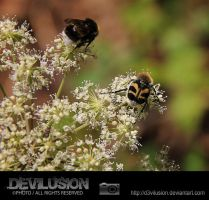 bee beetle and a bumble bee by D3vilusion
