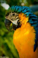 Macaw 1 by tazmaniandevil777