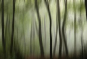 Summer Woods Abstract by CeriDJones