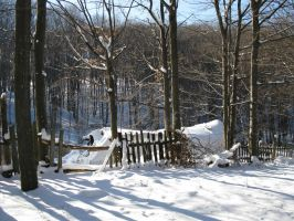 Winter forest and fence by Linden-Oak