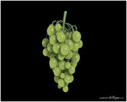 Grapes preview by admax