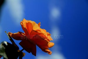 thank you by asylumimages