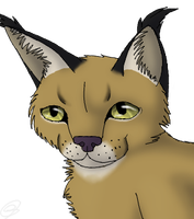 Realistic Caracal by indesomniac