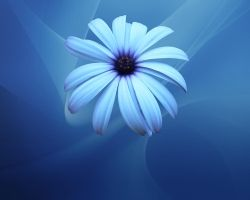 Blue Flower Wallpaper by Sarman