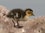 Dublin Zoo Duckling by Stratalancer