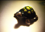 Tiny Turtle by tabbycat1212