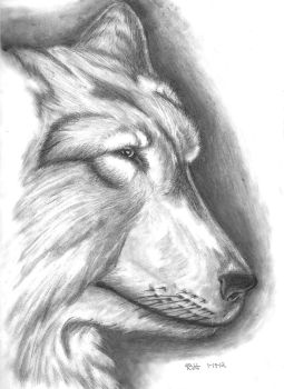 Wolf Sketch by DmierMortus