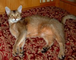 Foxy Cat in bed 2 by Soniafm1027