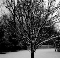 Bare Tree by RudolphSnow