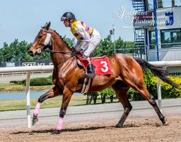 Horse Racing 512 by JullelinPhotography