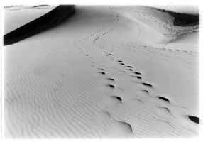 Sand Dunes 5 by krnc