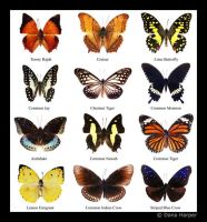 Butterfly Chart by chaoticparadox