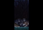 wolveses by HickleStine