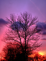 Glowing Tree by Atagamay