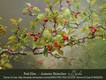 Autumn Branches - Png-files by Euselia
