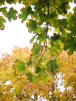 Green and yellow. by asaluiphotography