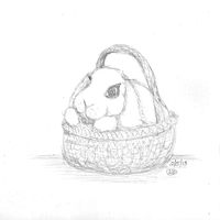 Daily Rabbit: 02-05-13 by bunnykissd