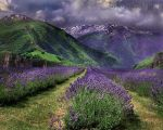 Lavender Valley by WishmasterAlchemist