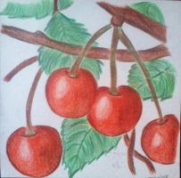 Cherries by PatriciaG
