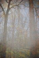 Forest Texture Stock by redwolf518stock