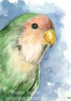 Peach-faced Lovebird ACEO by Pannya
