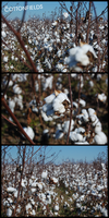 The Cotton Fields by Draciel56