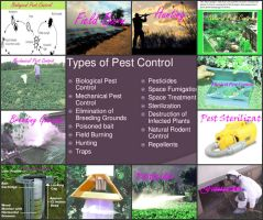 How To Find Solutions For Pest Problems? by homepestcontrol