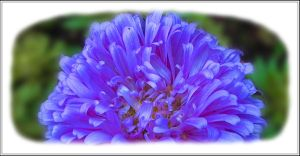 Blue Flower by rosebud10