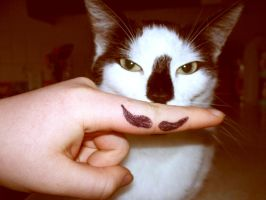Cat with a Moustache? by MegBethany
