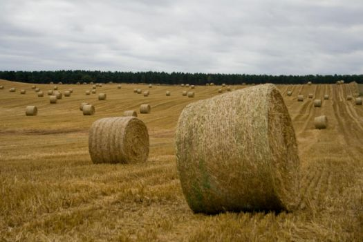 silage bail field - Stock by Sassy-Stock