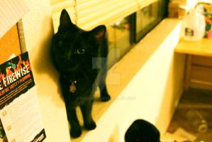 The One with the Black Cat in the Window... by D3adbug