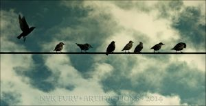 birds on a wire by kannagara
