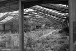Greenhouse / Gewaechshaus 7 by bluesgrass