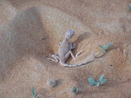 Stock 23 Lizard by monarxy-stocks
