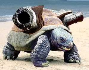 Blastoise on the Beach