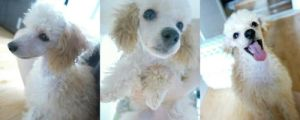EXO-K Kai's dog Jjangah ^^ by ambieshinee