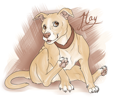 May Doggy by razrroth
