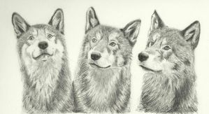 Three Wolves by karlalii