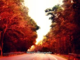 Nature In The Road by Sireysi