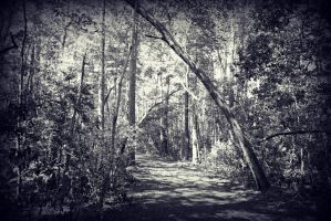 Tree Over the Trail by DonLeo85