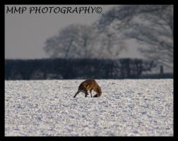 Fox In The Snow no2 by 001mark