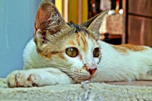 My lovely cat , Siput by RayyanCR