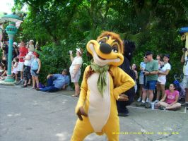 Timon by bsbjess
