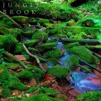 Jungle Brook by Linkineos