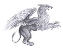 Griffin by Canyx
