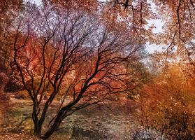 Mad colors of Autumn by DeSkal