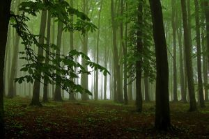 forest by Joffi